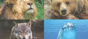 Bear, dolphin, lion or wolf! By WorkTime